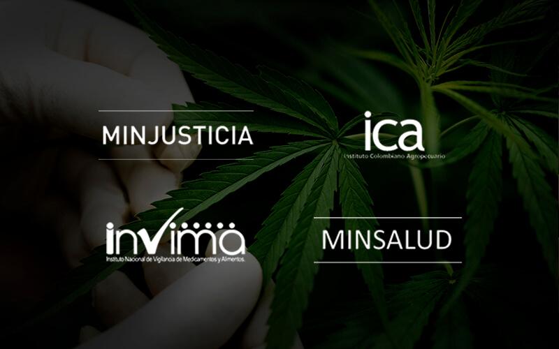 Licencias cannabis medicinal colombia